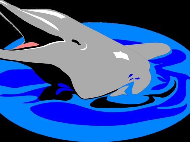 Northshore Swim